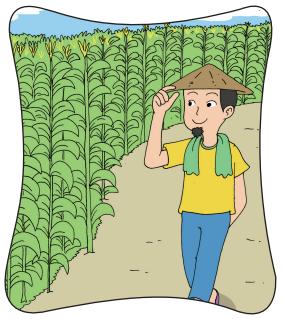 Petani Jagung yang Cerdik www.simplenews.me