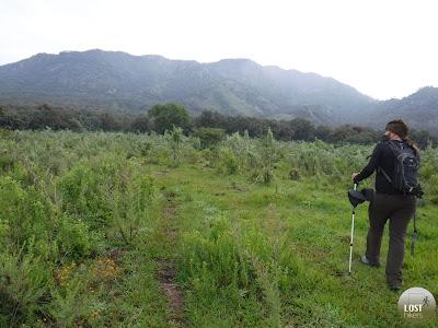 Pastizales rumbo al Cerro Los Bailadores