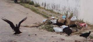 VÍDEO| Vereador Odair Holanda  e moradores recolhem o lixo do Bairro COHAB em Guadalupe