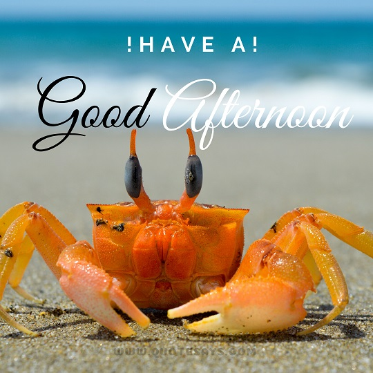 Good Afternoon Images of Crabe at the beach, Good Afternoon Images Hd, Good Afternoon Images Download