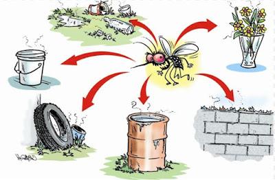 519 casos confirmados de Dengue em Registro-SP