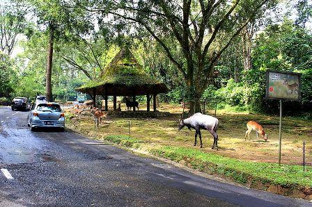 Taman Safari Bogor, Jawa Barat