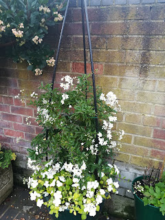 White clematis and white busy lizzies