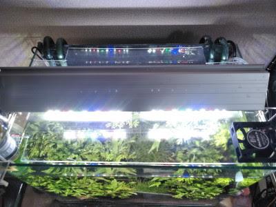 冷却ファン付きアクアリウム用蓋を設置して照明ON!PET板は意外と透明なのです。
