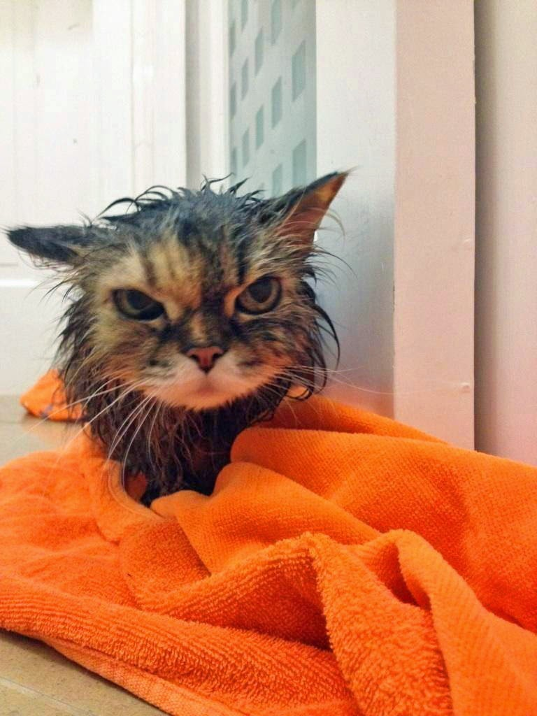 Adorable cats and dogs who really hate bath time (40 pics ...