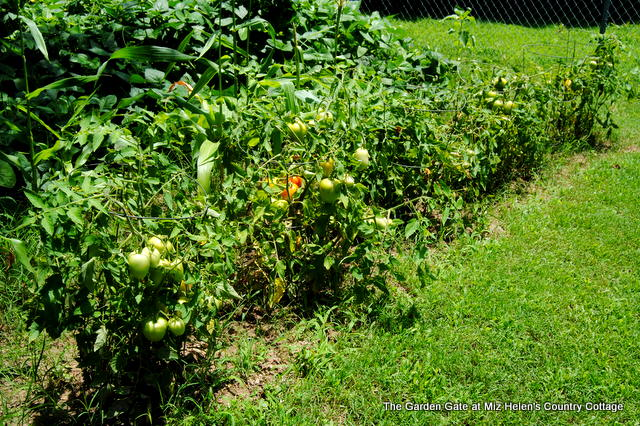 Summer Garden Harvest With Recipes at Miz Helen Country Cottage