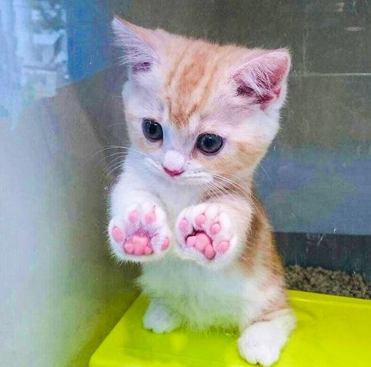 21 Cute Pictures Of Animals That Can Make Even The Worst Day A Bit Better - Oh, these paws... Look at them!