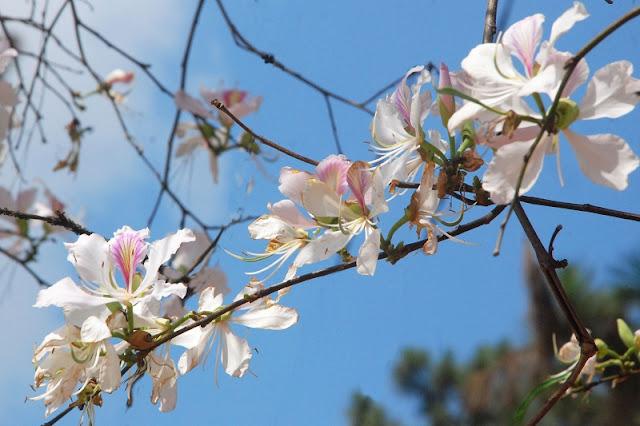 Beautiful flowers seasons in Dalat 6