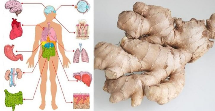 Ginger Is A Natural Medicine, Here Is How To Use It To Treat You