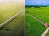 Lokasi, Fasilitas, dan Harga Tiket Masuk ke Agrowisata Paloh Naga
