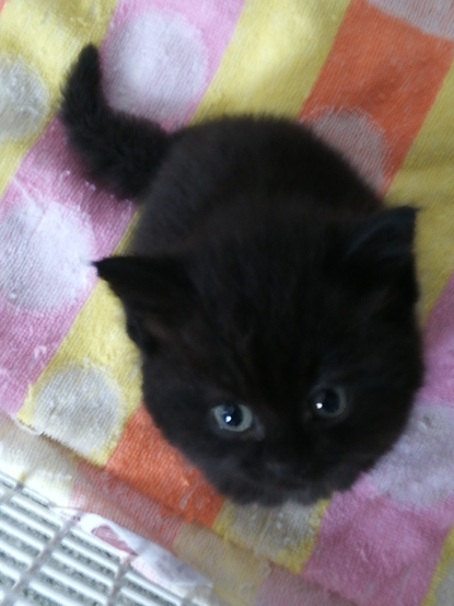 tiny black kitten on blanket