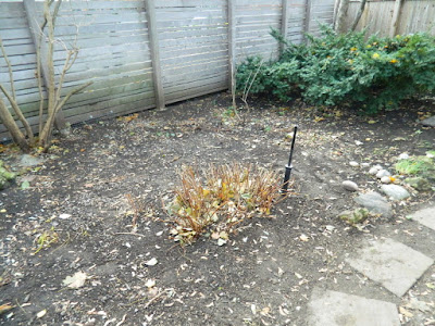 Toronto Cabbagetown Fall Backyard Garden Cleanup by Paul Jung Gardening Services after