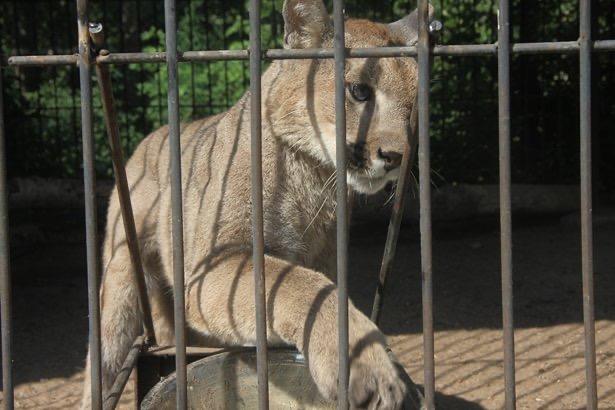 Десятки зверей сварились заживо в зоопарке Казахстана