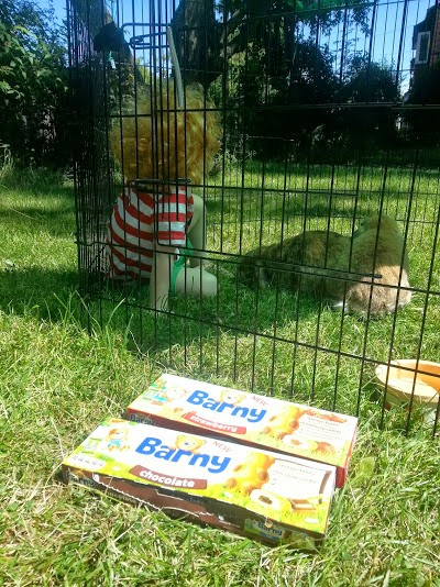 Barny Bear's Little Adventure - Barny snacks in boxes