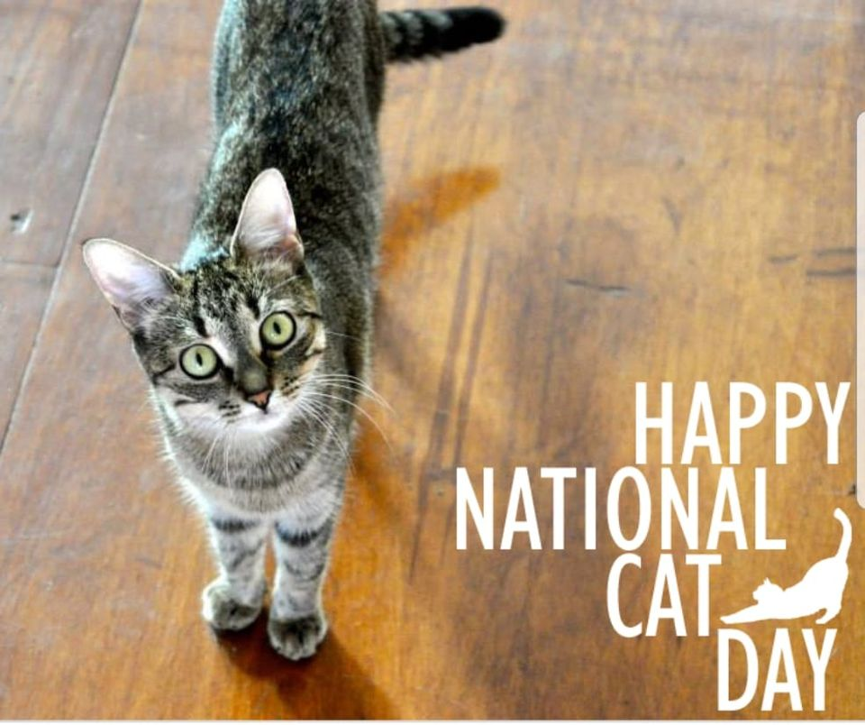 National Feral Cat Day Wishes Pics
