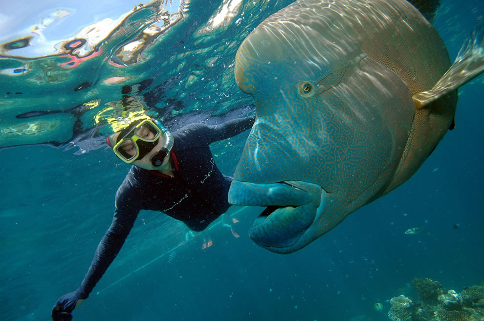 las majas de oz whitsundays amp great barrier reef