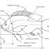 [pdf] Apostila - Curso de atualização em Piscicultura