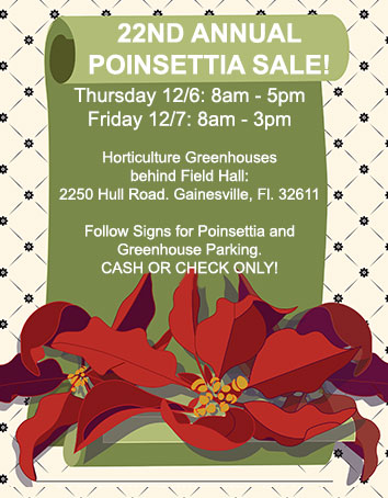 Poinsettia Flyer