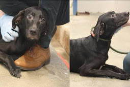 Scared sweet girl clings to her favorite volunteer as she got the news formally placed on death row