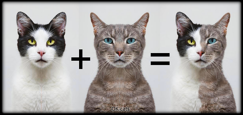 Photoshoped Cat picture • Laws of genetic are amazing • Mother + father = child. That's it, that's all.
