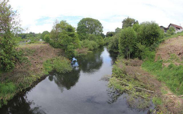Tala de árboles en el río Damas