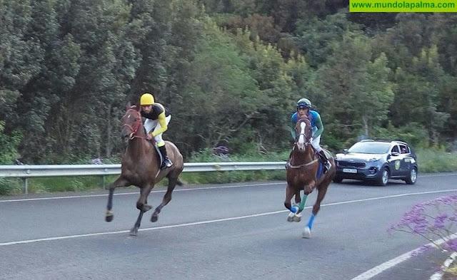 La Palma se convierte este sábado en referente del mundo deportivo del caballo con el Campeonato de Raids de Canarias