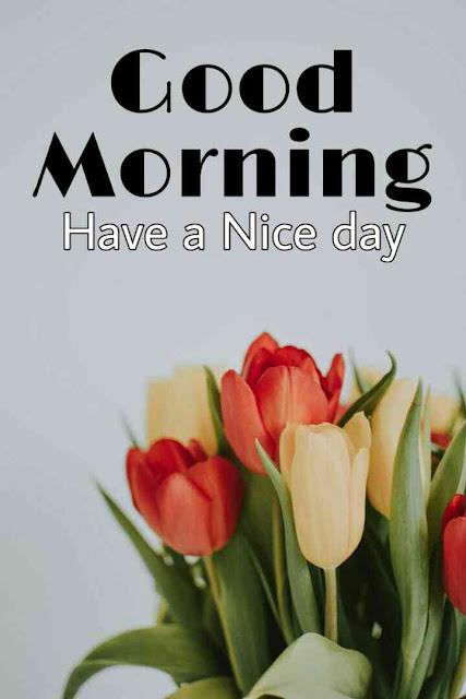 good morning ka nice picture