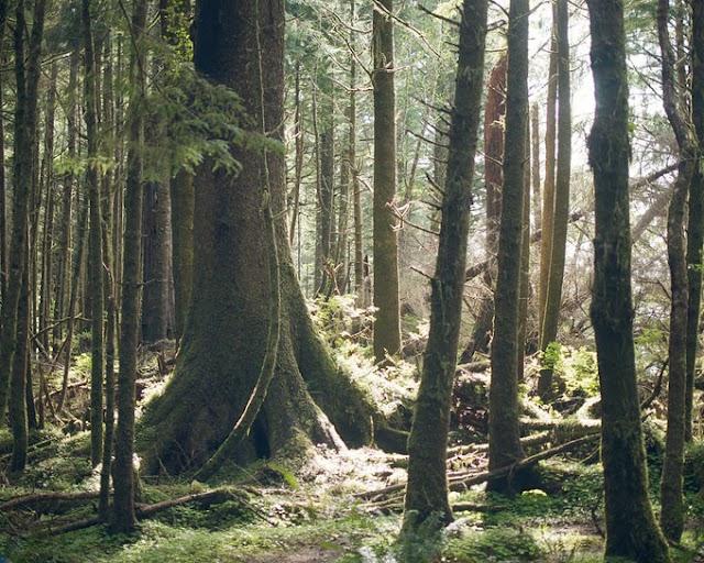 Έρευνα: Ο κόσμος χάνει τα παλιά δέντρα - Τί σημαίνει αυτό;