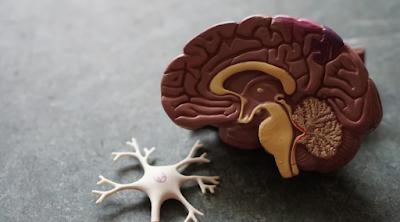 ماهو دماغ الانسان؟وكيف تقوم بالحفاظ على نشاطه؟وماهي الأشياء السلبية المؤثرة عليه؟