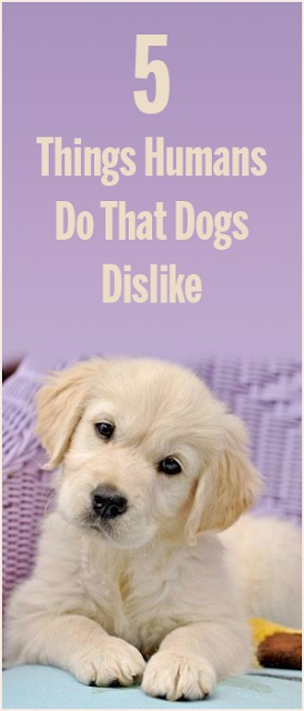 5 Things Humans Do That Dogs Dislike