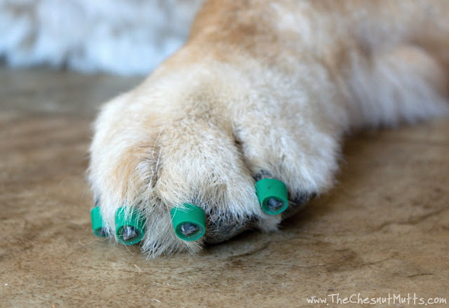 Jake with Dr. Buzby's ToeGrips for dogs