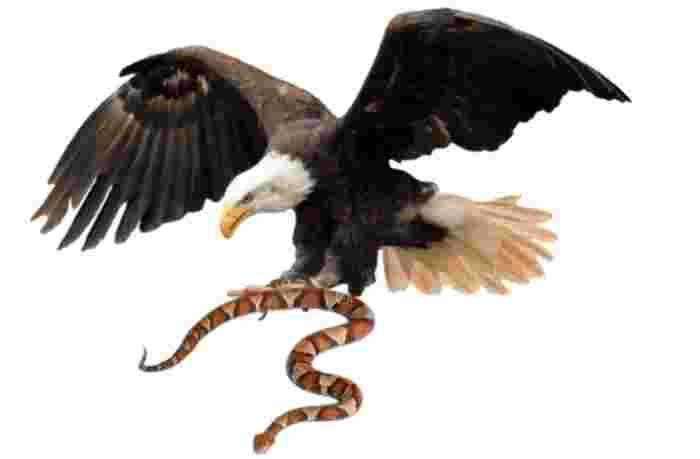 reincarnation of eagle