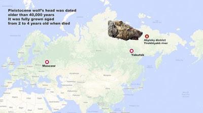 L'uomo locale Pavel Efimov trovò la testa del lupo del Pleistocene.