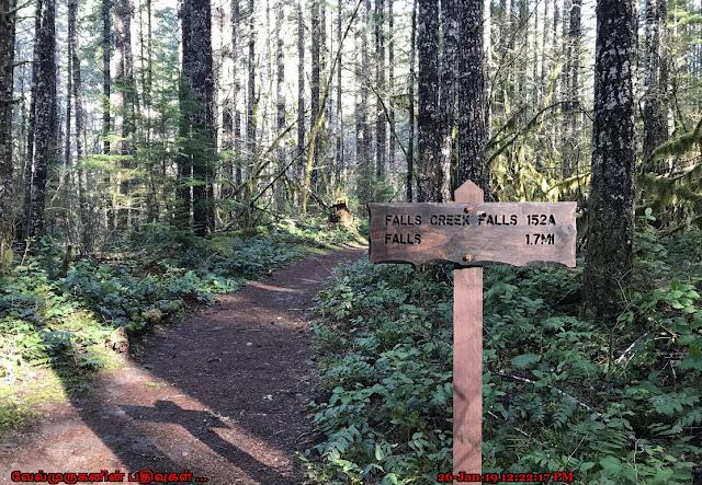 Falls Creek Falls Trail 152A