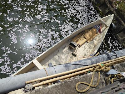 【大阪府門真市三ツ島】砂子水路の桜 船