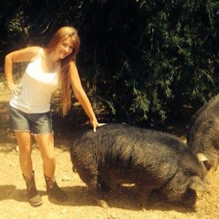 Heritage Pig Breed: American Guinea Hog