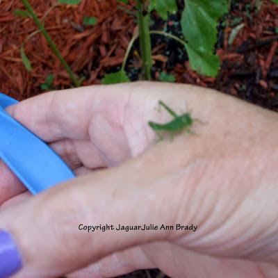 Green grasshopper hopped on my hand