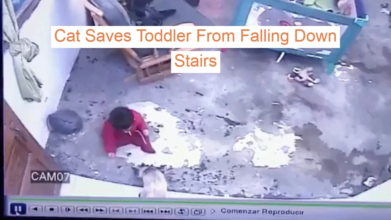 Cat Saves Toddler From Falling Down Stairs