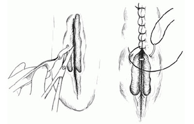 Prolapse in Small and Large animals