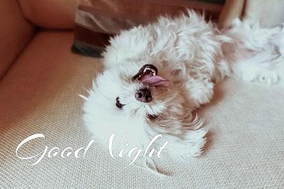 Top Good Night Image for Whatsapp