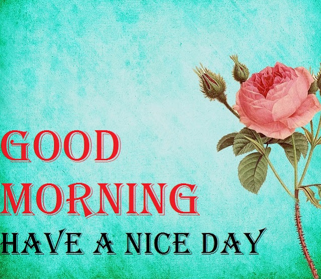 Very Good Morning Images with Flowers HD