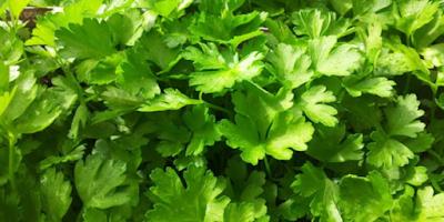 Gambar Fungsi dari Herbal adalah Meningkatkan Ketahanan Tubuh