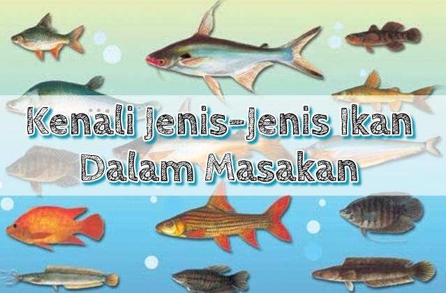 Kenali Jenis Jenis Ikan Untuk Masakan Supermom With Superkids