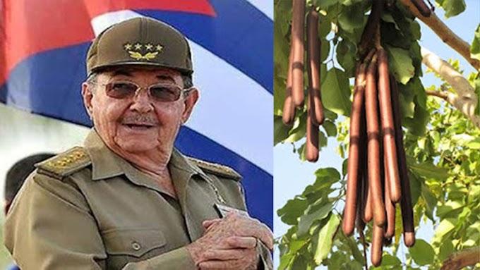 "Raúl Castro apoyó el ""Proyecto de la Moringa"" de Fidel Castro solo porque la palabra moringa terminaba en inga"