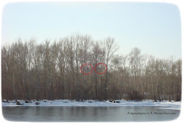 reka-zima-derevja-pticy