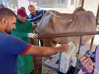 مبادره حياه كريمه علاج وفحص 5900 رأس ماشية مجانا لصغار المزارعين بمحافظة المنوفية