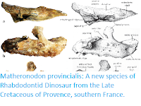 http://sciencythoughts.blogspot.co.uk/2017/10/matheronodon-provincialis-new-species.html