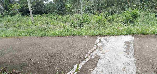 Kebun manggis dijual murah, SHM. Cocok untuk villa, masuk mobil