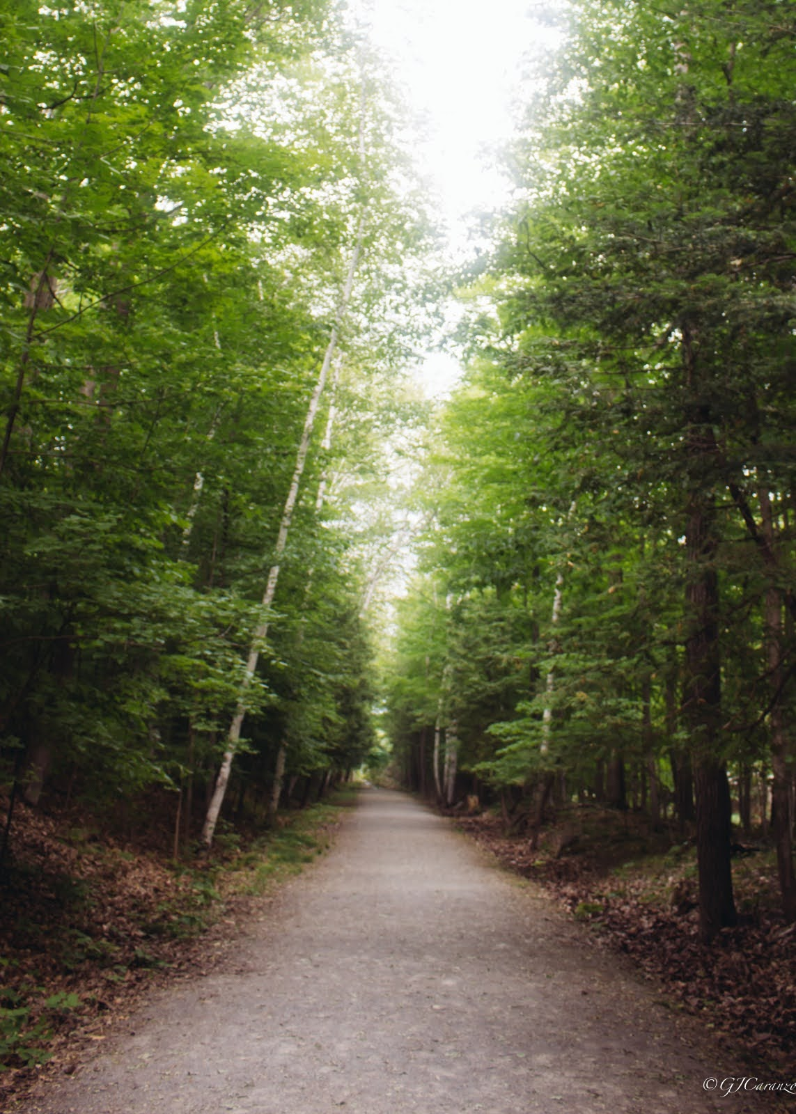 Morris Island Conservation Area: A Short Day Trip from Ottawa, Ontario