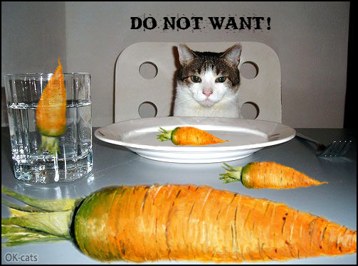 Photoshopped Cat picture • Hungry cat is confused. He does not want to eat carrots: he's not vegan!